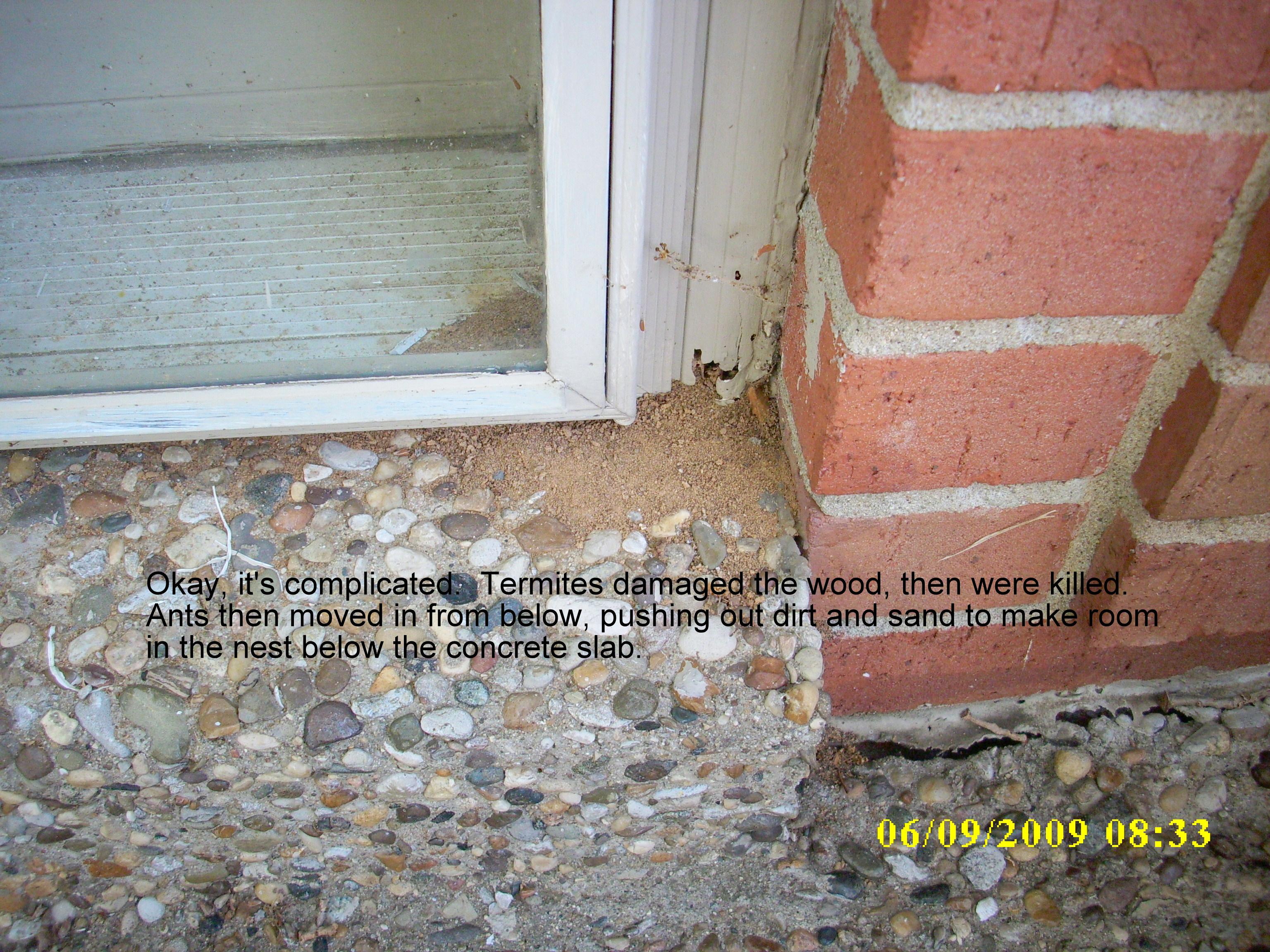 Ants At Threshhold 002 Swat Team Pest Control Services