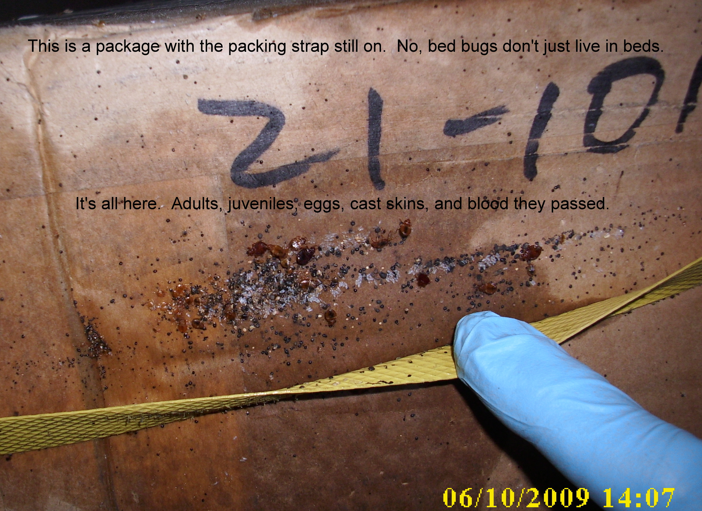 Bed Bugs Swatteam Pest Control Services Of Kentucky