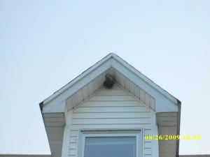 dual hornet nests 002