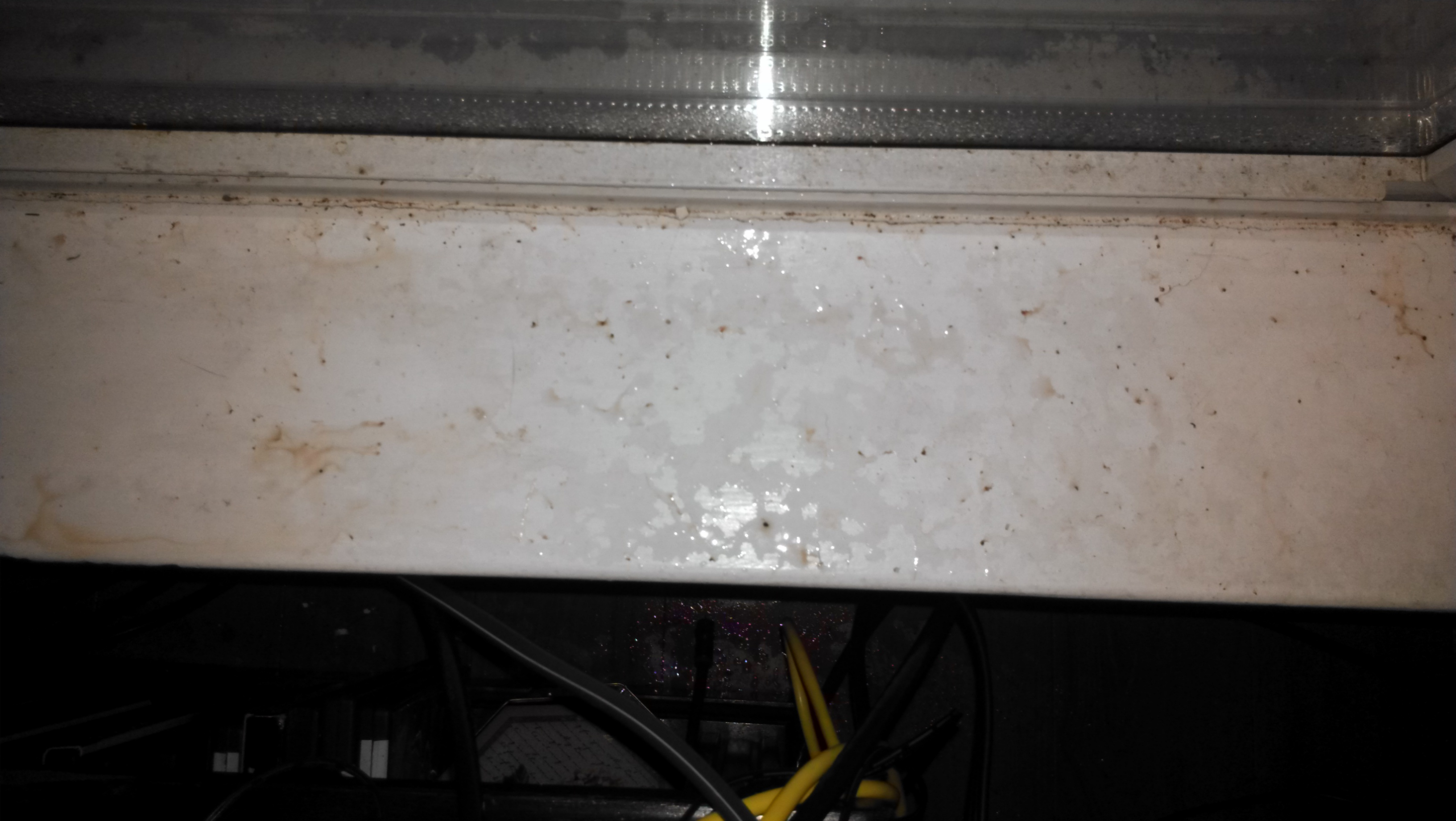 Windowsill Fleas After Moisture Swat Team Pest Control