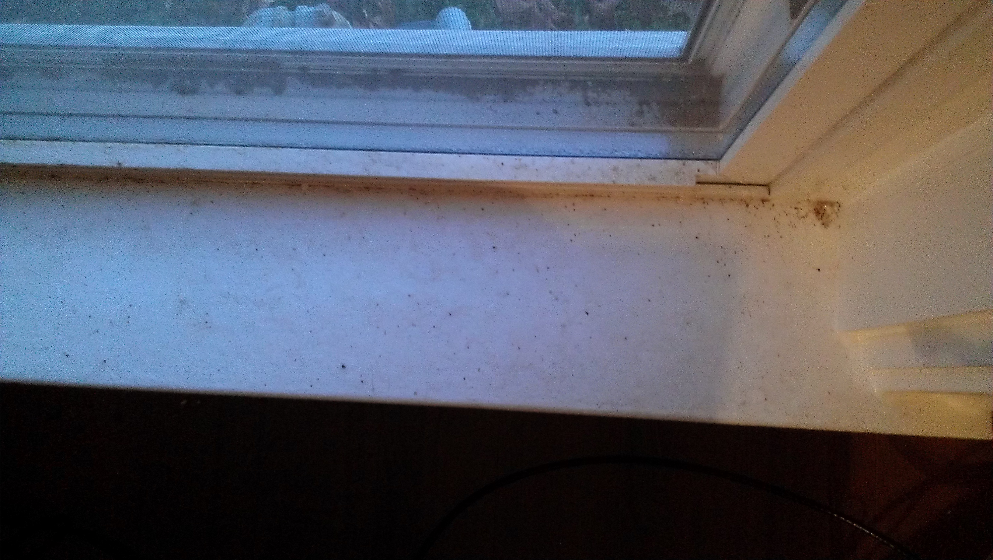 Windowsill Fleas Swat Team Pest Control Services Of Kentucky