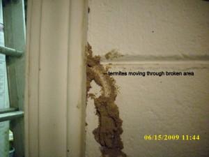 biffs termites 010