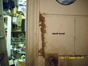 biffs termites