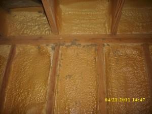 termites in foam 001