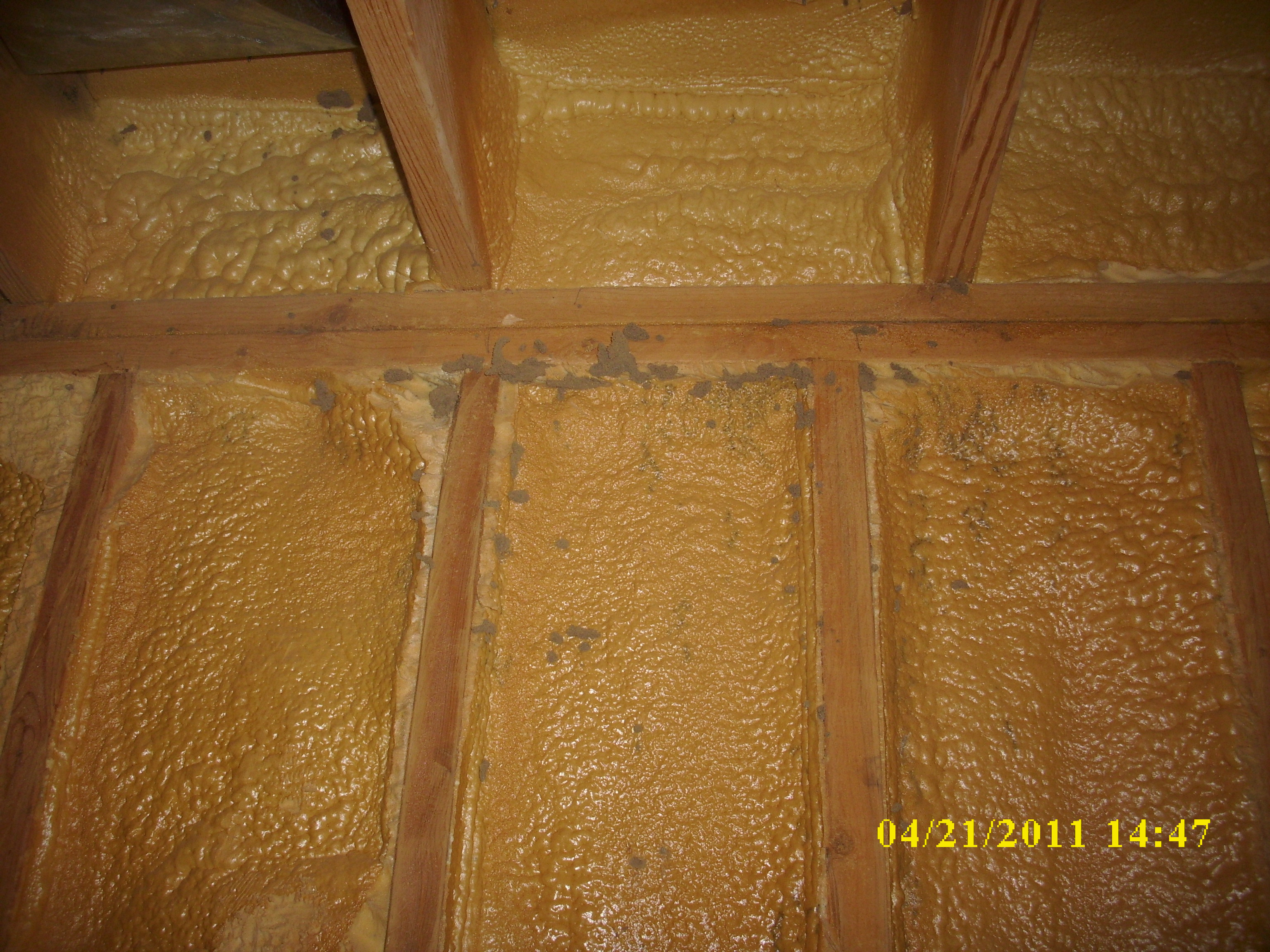 Termites In Foam 001 Swat Team Pest Control Services Of