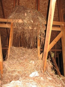 Attic Nest Swat Team Pest Control Services Of Kentucky