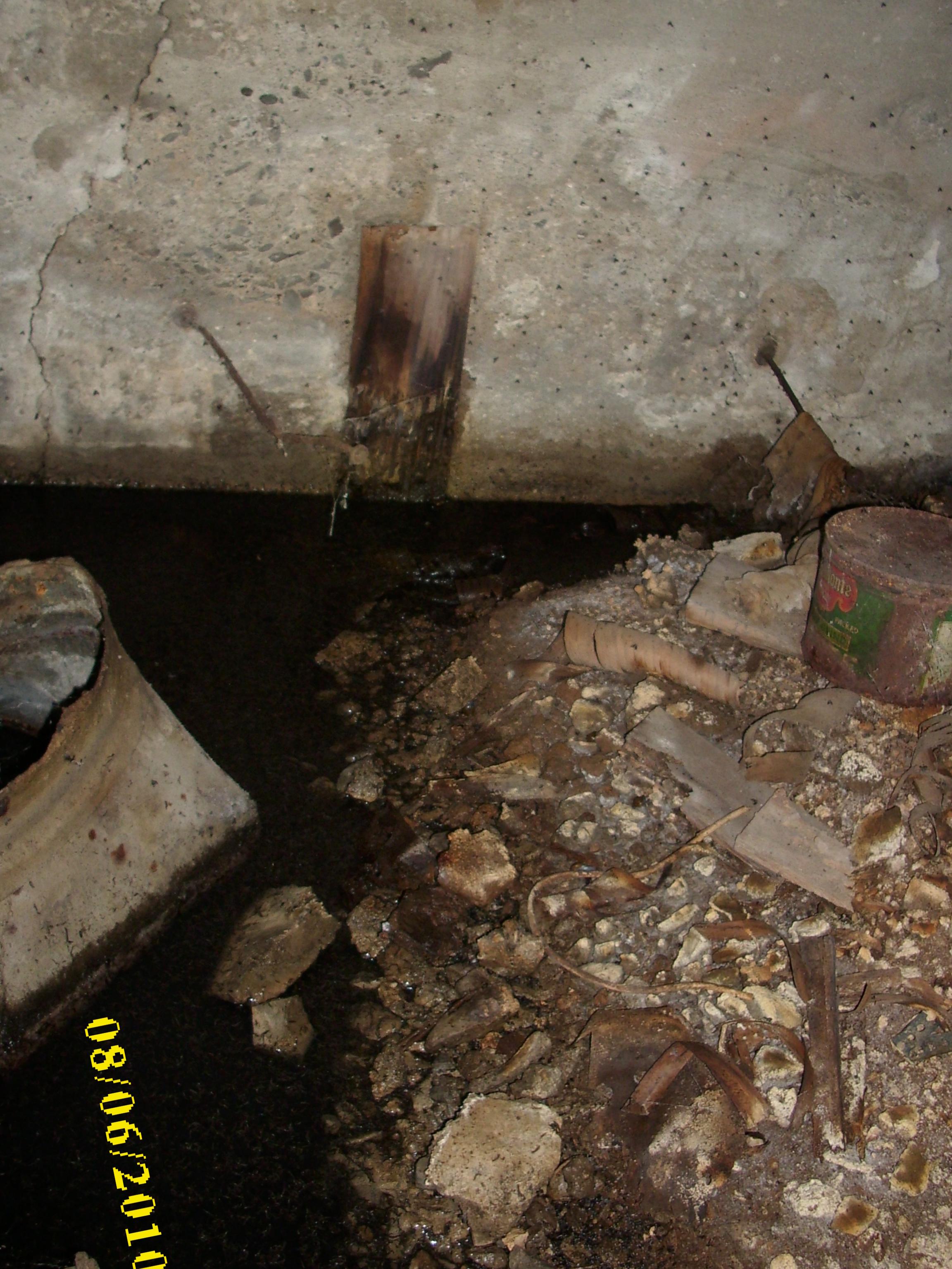 Drain Moths And Larvae 007 Swat Team Pest Control